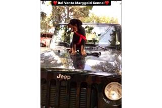 Del Vento Marygold Kennel
