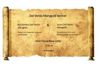 Bucephalus Del Vento Marygold -Laura Del Vento Marygold